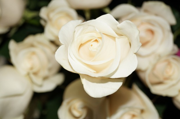 photo Sublime Fleuriste 082