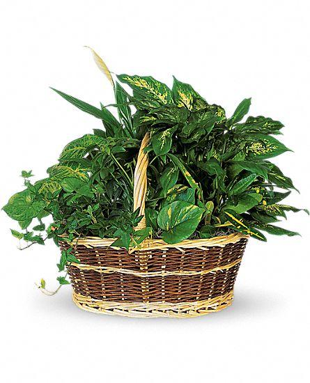 Condoléances - Plantes et Jardins de plantes T212-1A1