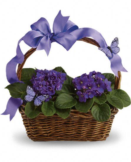 Violettes et papillons de teleflora t92 3a for 3a interieur accessoires