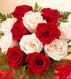 1 dozen favorite red and white roses wrapped f231 mightylinksfo Gallery
