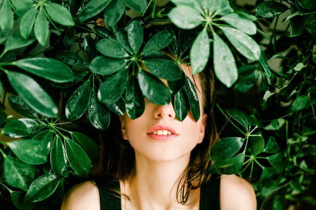 Des plantes dépolluantes capables d'assainir l'air de nos intérieurs