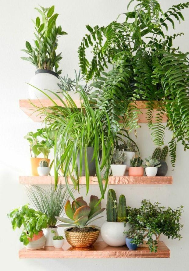 Pour l'amour des plantes