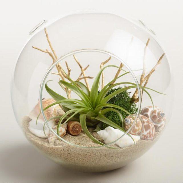 Terrarium plante arérienne océanique SUBPLANT-021