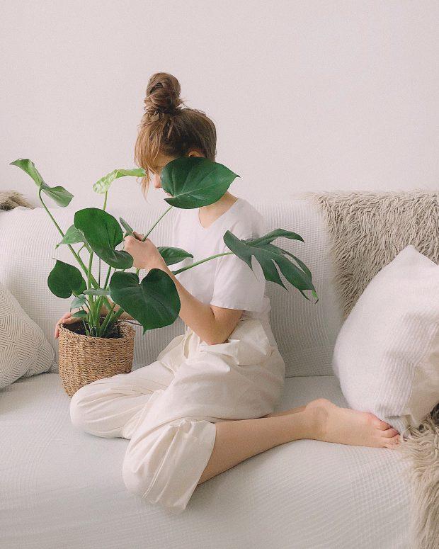 10 plantes dépolluantes qui améliorent votre intérieur